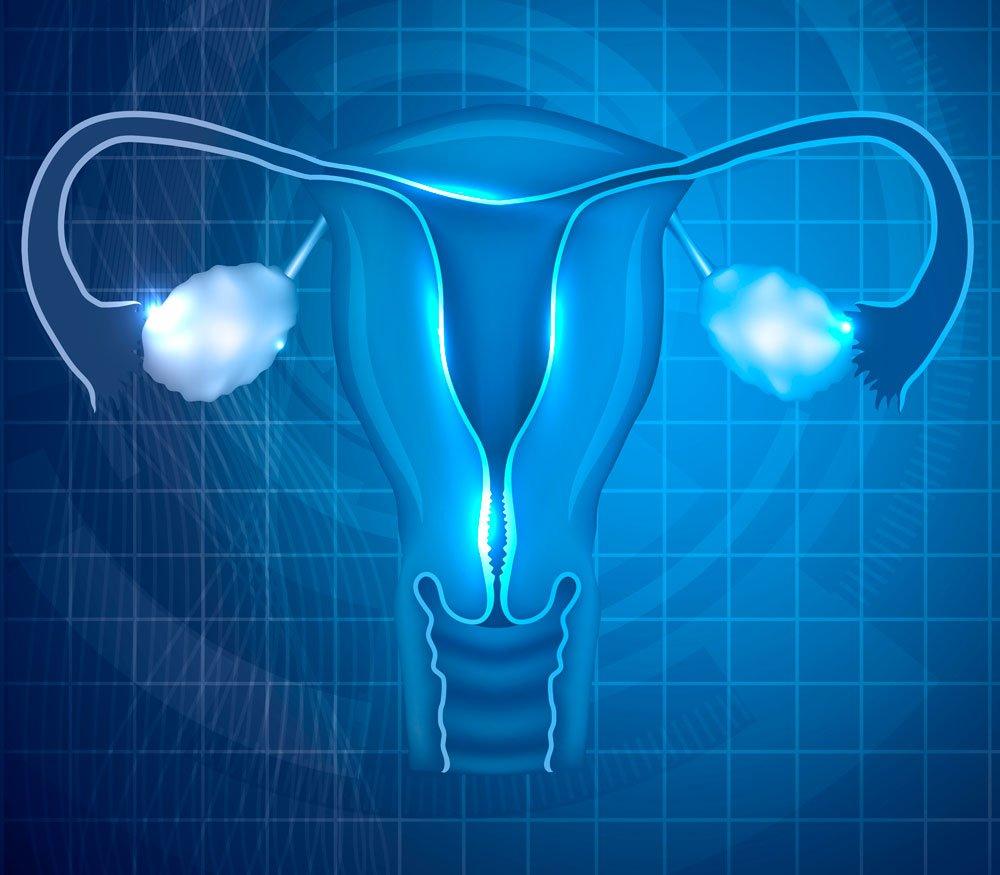 Un estudio de Instituto Bernabeu investiga las regiones que afectan al microbioma vaginal y endometrial