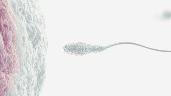 Blocco degli embrioni nella fecondazione in vitro