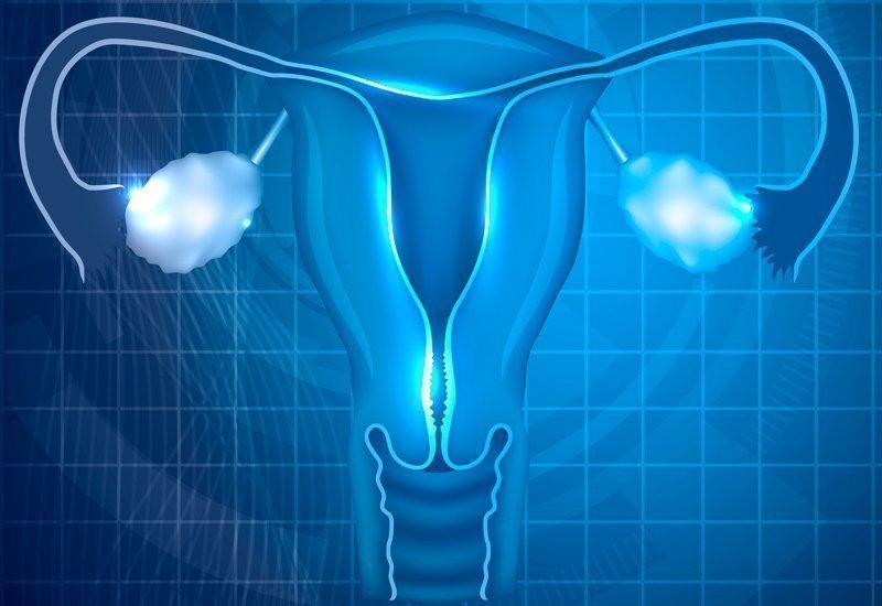 Instituto Bernabeu analyses the impact of the vaginal microbiome on pregnancy rates in assisted reproduction treatment patients