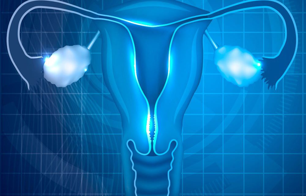 A research by Instituto Bernabeu investigates the regions that affect the vaginal and endometrial microbiome
