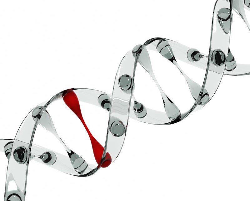 Human Reproduction destaca una investigación de Instituto Bernabeu sobre la influencia del ADN mitocondrial en los resultados de la FIV