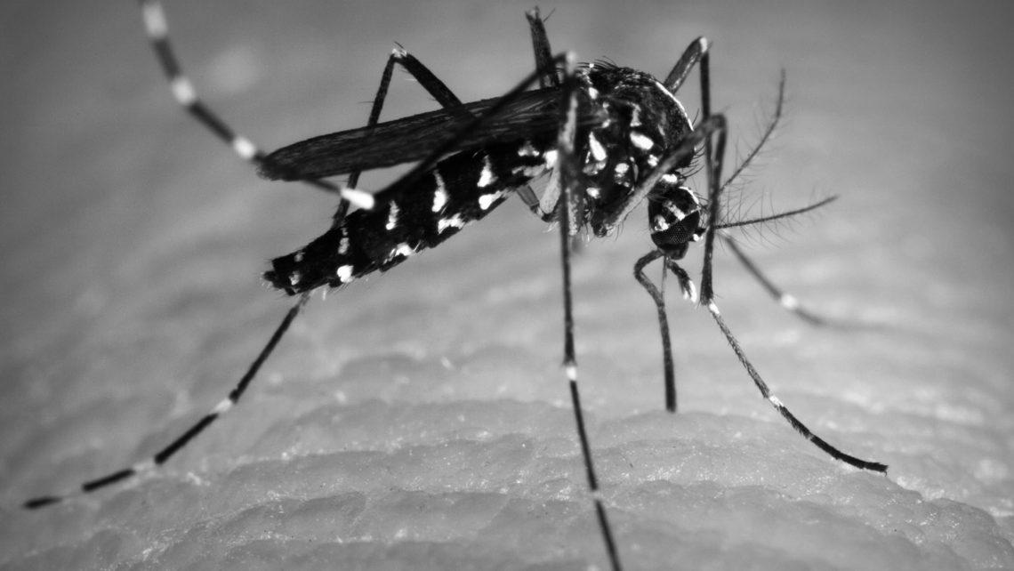 El virus Zika durante el embarazo