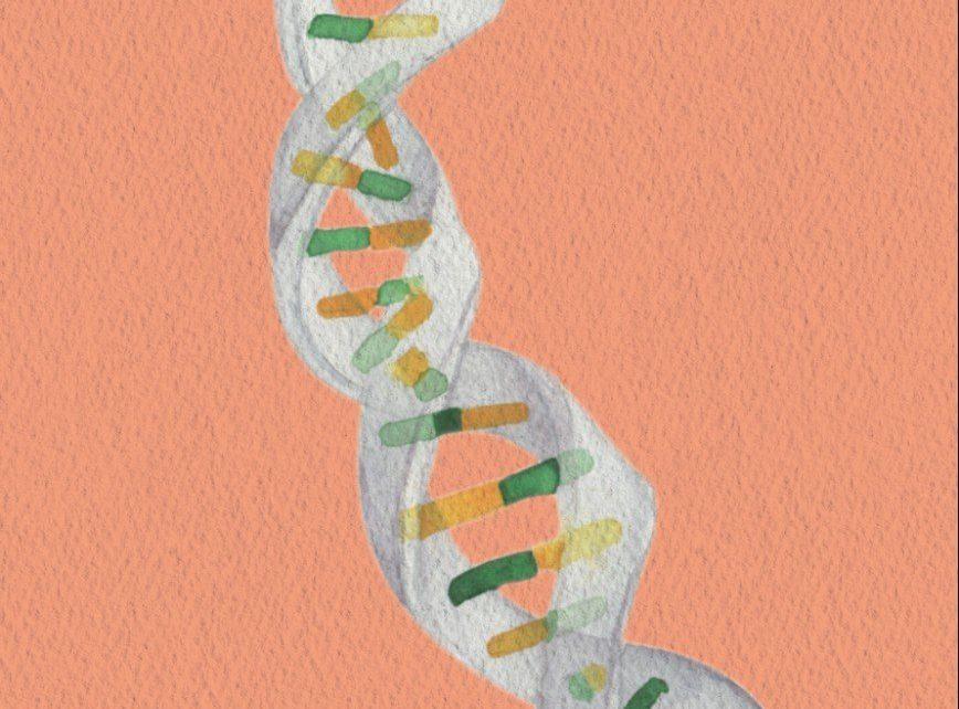 Las funciones del ADN ´basura`