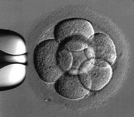 Medios de cultivo embrionario