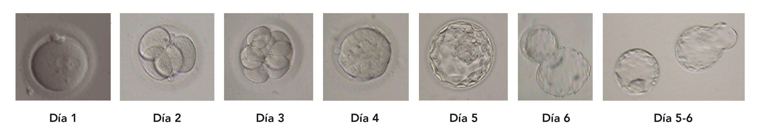 Criterios para la clasificación de los embriones