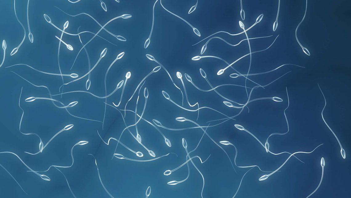 ¿Cuánto viven los espermatozoides?