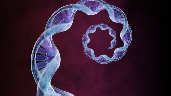 Banco de conservación del ADN de las Ovodonantes