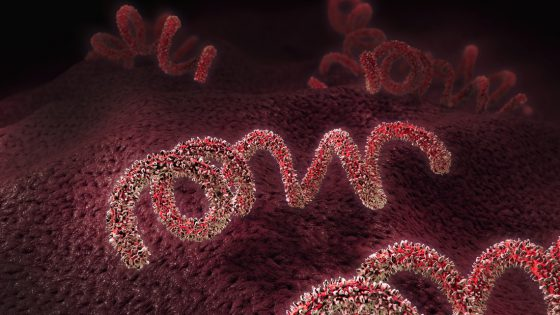 Importance of the Sexually Transmitted Diseases (STD's) detection in sperm and egg donors