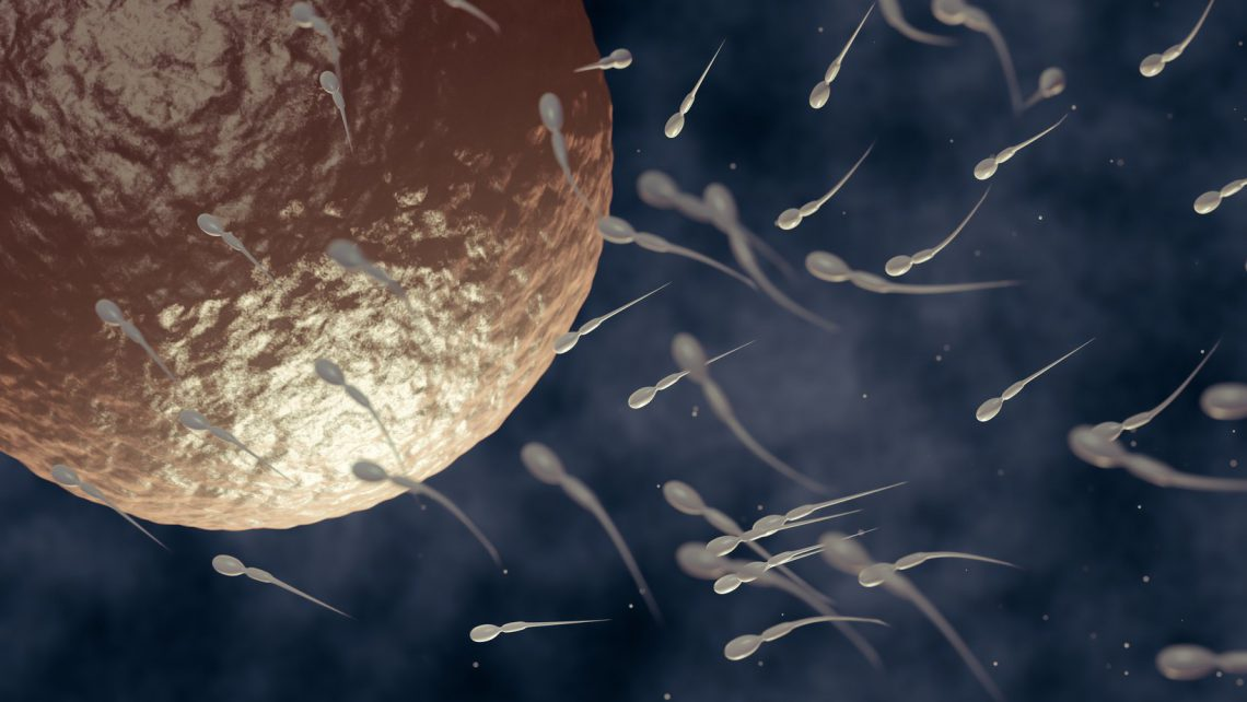 What is the spermatogenesis about?