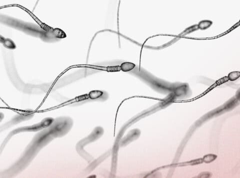 ¿Qué es la espermatogénesis?