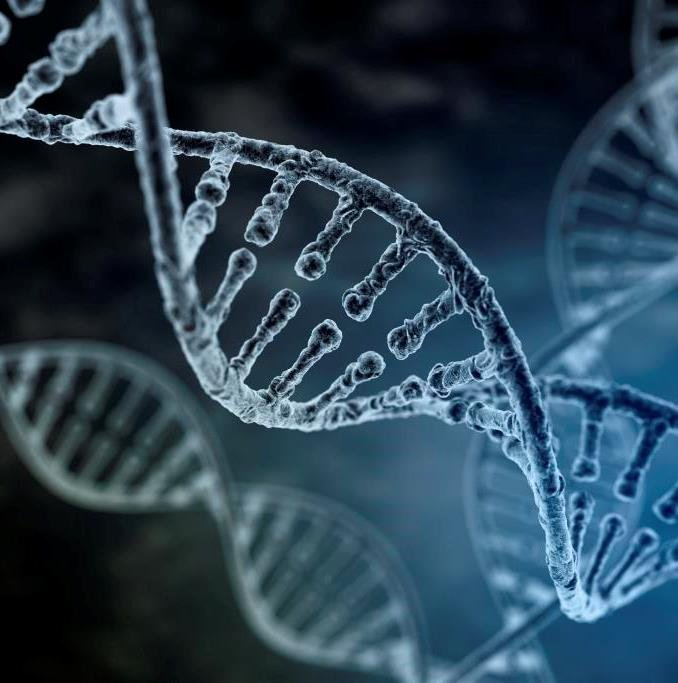 L'importanza del DNA nella nostra vita: 25 aprile, Giornata Mondiale del DNA - Instituto Bernabeu