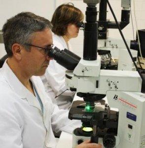 Células natural killers (NK) y la implantación del embrión