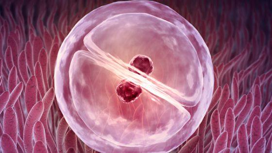 """Was nennen wir bei einer Fruchtbarkeitsbehandlung """"Implantationsfenster""""?"""