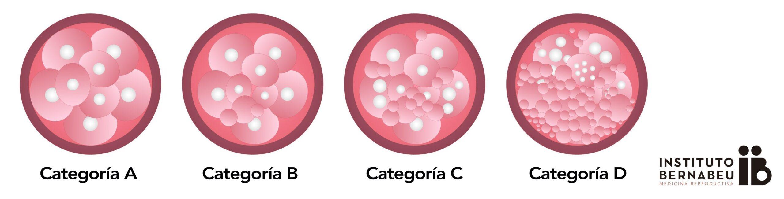 Critères pour la classification des embryons