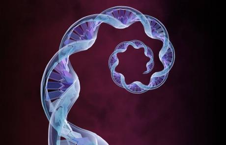 ESPIRAL-ADN-460x295