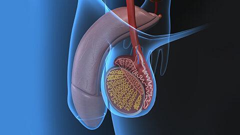 Andrologie et urologie