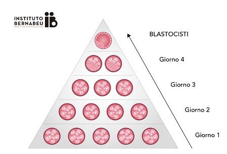 Criteri per la classificazione degli embrioni - Instituto Bernabeu