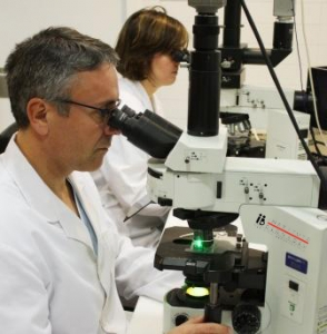 Comprehensive Chromosomal Screening (PGS/PGT-A/CCS): More reliable and less damaging for embryos