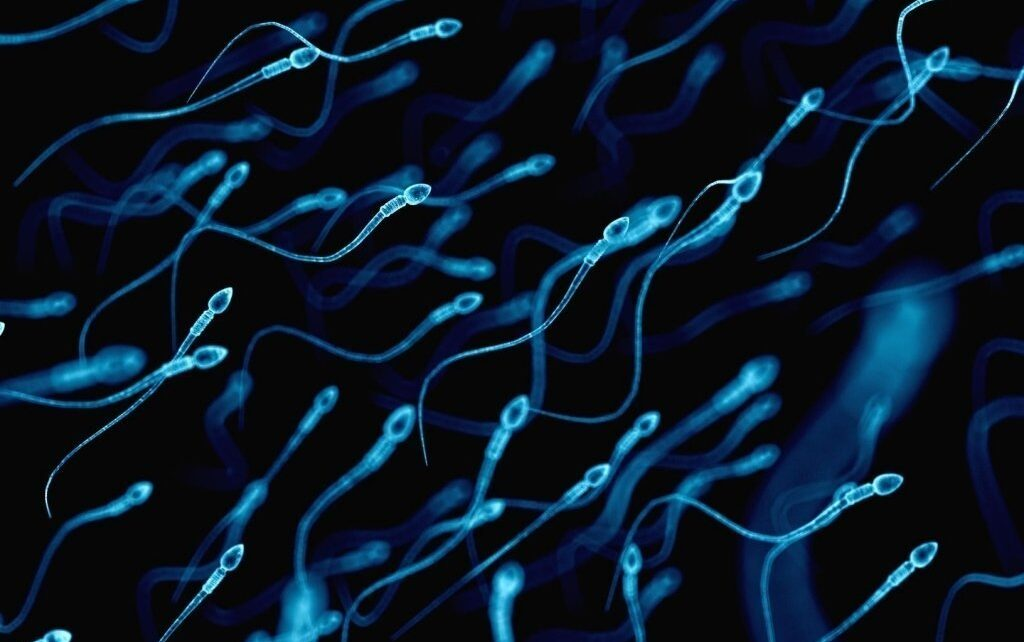 Antioxidant-rich diet and improved male fertility
