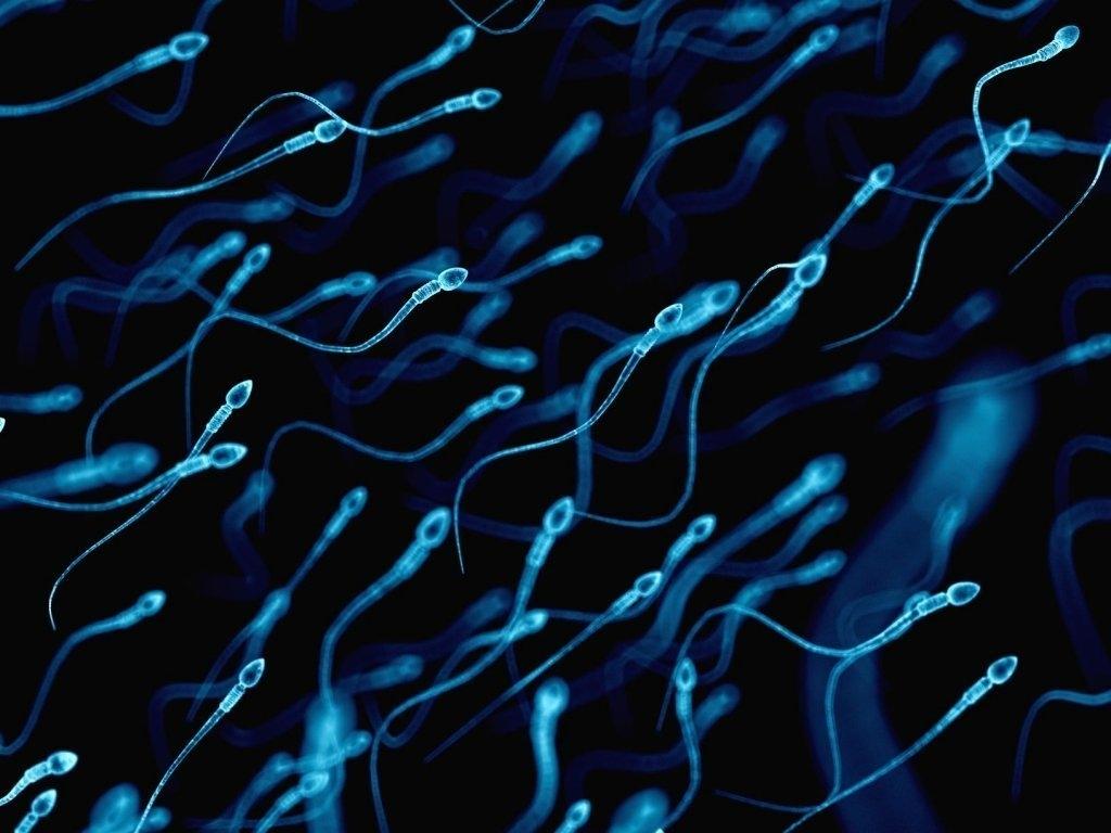 Régime alimentaire avec antioxydants chez l'homme et amélioration de la fertilité - Instituto Bernabeu