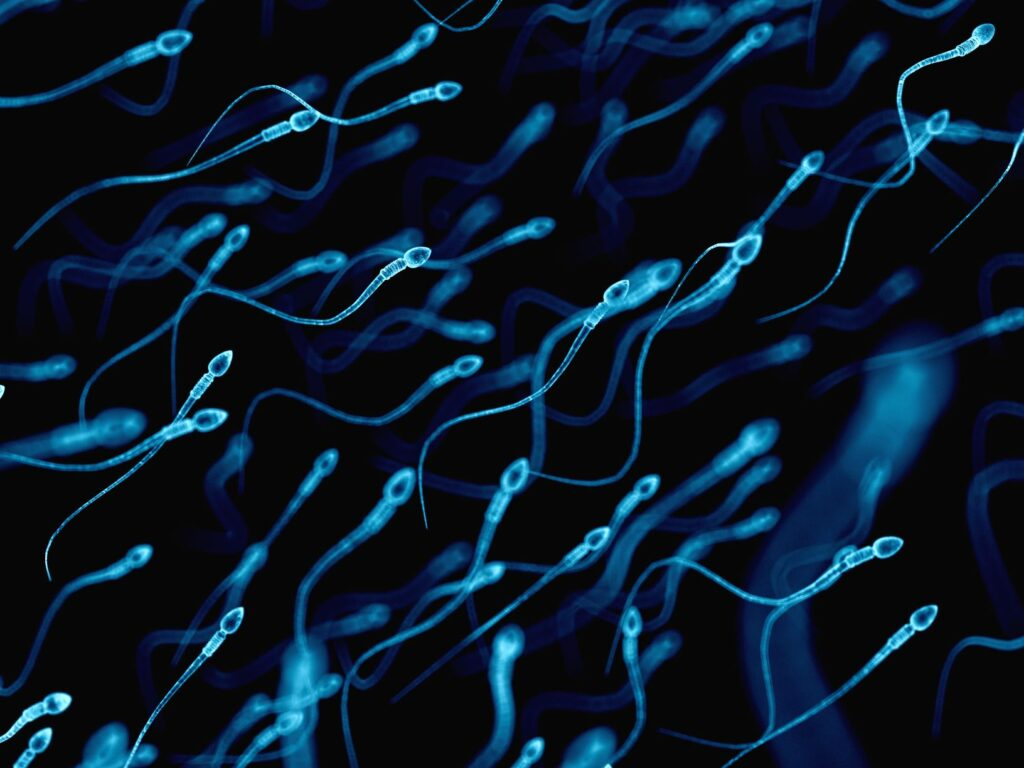 Semen quality parameters according to the World Health Organisation (WHO) - Instituto Bernabeu