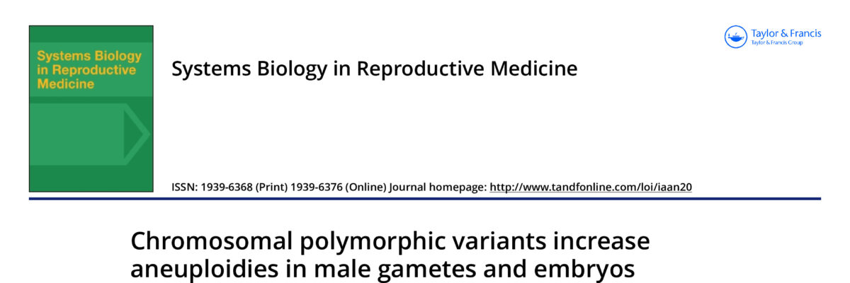 Chromosomal polymorphic variants increase aneuploidies in male gametes and embryos