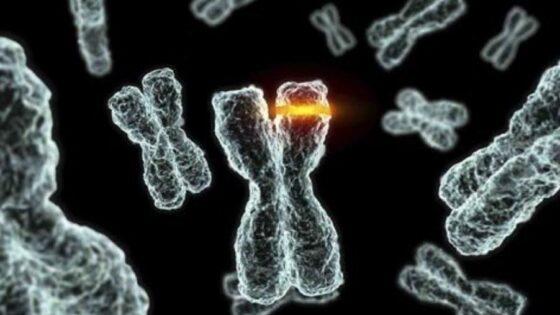 Herencia de las enfermedades genéticas