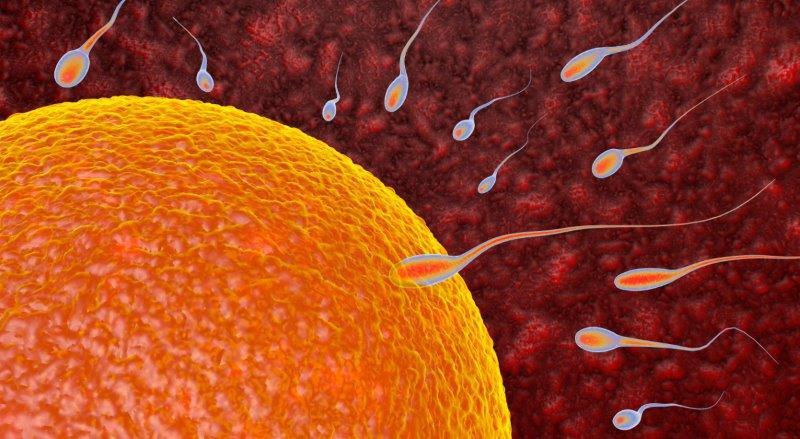 Was ist die Heiminsemination? Welches sind die Unterschiede zur Insemination in einem Fruchtbarkeitszentrum?