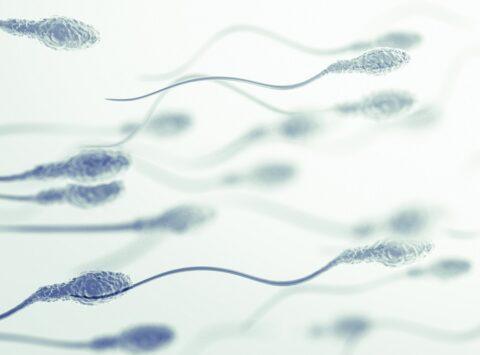 Cultivo seminal: espermocultivo