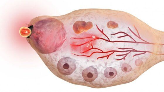L'Ovulazione