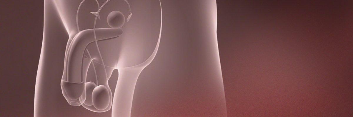 Techniques d'obtention de spermatozoïdes: la biopsie et la ponction testiculaire (TESA y MESA)