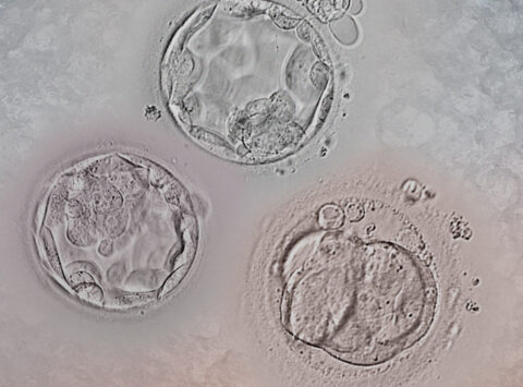 Embryo thawing: everything you need to know about devitrification