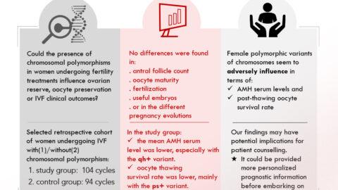 Das Instituto Bernabeu erforscht den Zusammenhang zwischen den chromosomalen Polymorphismen und den Ergebnissen der In-vitro-Fertilisation