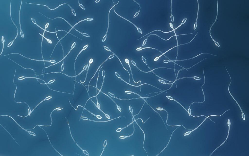 Asthenozoospermie: Was ist das? Wie entdeckt man sie? Welche Behandlung führt zur Schwangerschaft?