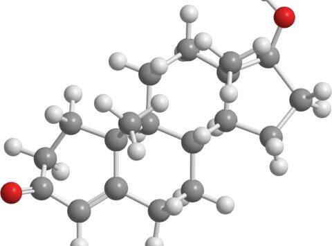 Testosterona y su efecto en la fertilidad masculina y femenina
