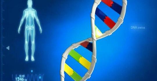 Il cariotipo genetico