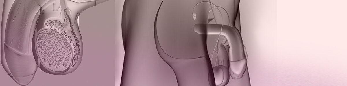 Eyaculación precoz y otros problemas en el eyaculado