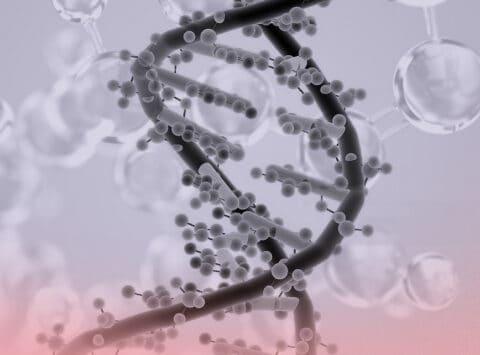 Antigene HLU C e il suo impatto sullo sviluppo dell'embrione
