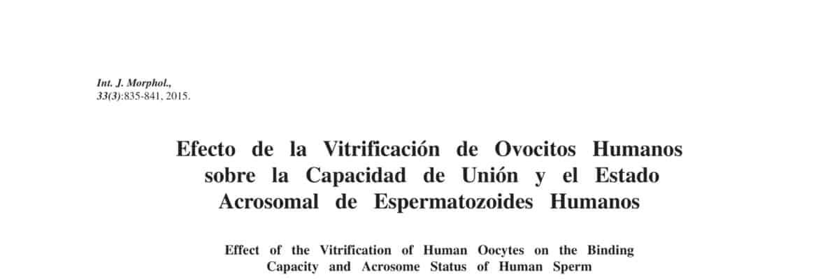 Efecto de la Vitrificación de Ovocitos Humanos sobre la Capacidad de Unión y el Estado Acrosomal de Espermatozoides Humanos