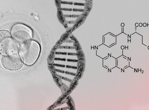 L'Institut Bernabeu étudie si les mutations dans le gène qui métabolise l'acide folique affectent l'embryon