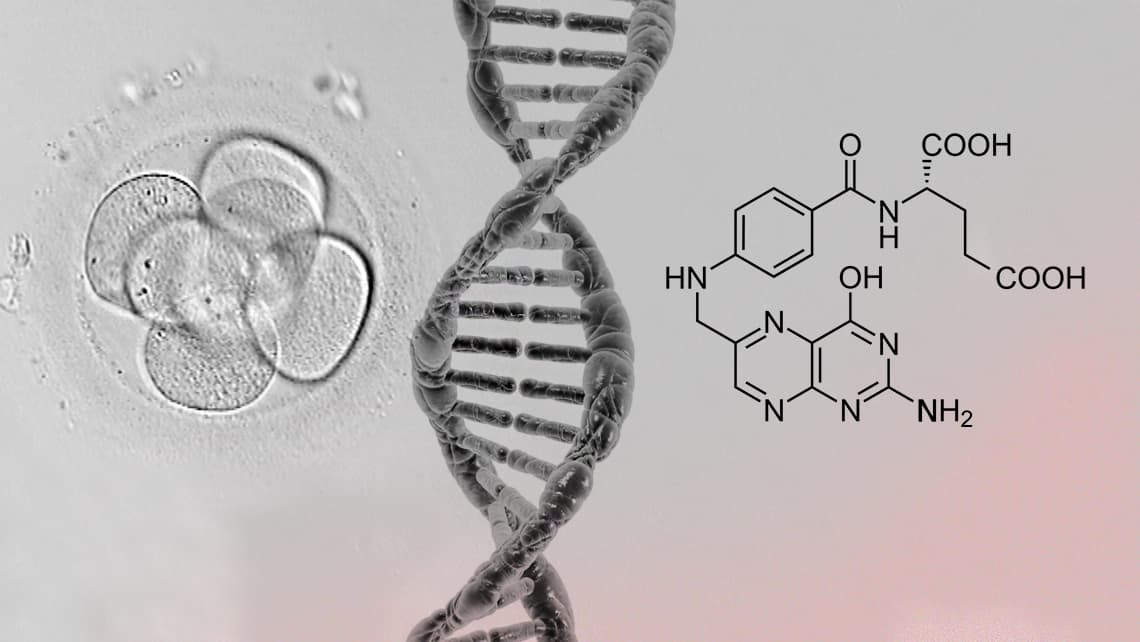 Instituto Bernabeu investigates whether embryos are affected by mutations in the gene that metabolises folic acid